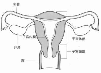 形成 異 後 子宮 高度 頚部 手術